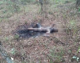 Thi thể người phụ nữ cháy đen trong rừng thông