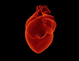 Nghiên cứu ngăn ngừa và điều trị hội chứng ngưng tim đột ngột dựa vào giới tính