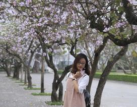 Bạn trẻ Thủ đô thích thú tạo dáng bên sắc tím hoa ban