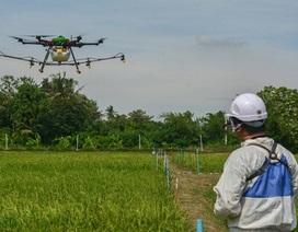 Bayer hợp tác cùng IRRI thúc đẩy công nghệ Gieo sạ tại châu Á