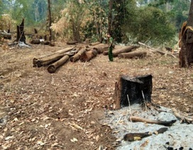 Phát hiện một vụ phá rừng trong Vườn quốc gia Yok Đôn