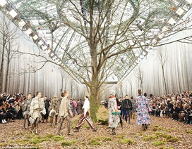 Chặt cây để trang trí sàn diễn thời trang, nhà mốt bị lên án