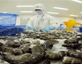 """Doanh nghiệp xuất khẩu tôm """"sốc"""" với mức thuế bán phá giá của Hoa Kỳ"""