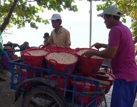 Phú Yên: Kiếm 5 triệu đồng mỗi đêm nhờ trúng đậm ruốc