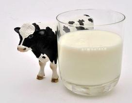 Từ sữa bò đến sữa hạt: Bạn chọn sữa nào?