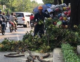 Bị cành cây rơi trúng đầu khi đứng bên đường, cô gái trẻ nhập viện