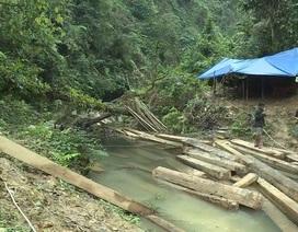 Kiểm điểm trách nhiệm Chủ tịch, Phó Chủ tịch xã để xảy ra phá rừng