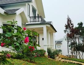 Tận hưởng cuộc sống trong lành với biệt thự ngoại ô