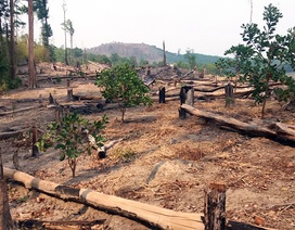 """Mất hơn 240 ha rừng, Sở báo cáo do """"dân lấn chiếm"""" (!?)"""