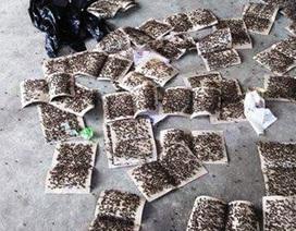 Dân mang hàng trăm miếng dính ruồi đến phản đối trang trại trâu bò