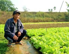 Mỗi tháng thu vài chục triệu đồng nhờ trồng rau an toàn