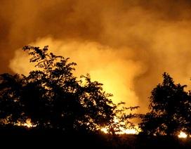 Cháy lớn ở rừng tràm, hàng trăm cảnh sát được huy động dập lửa