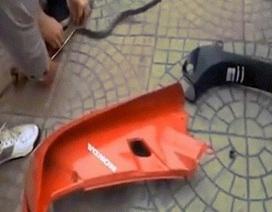 Cảnh bắt rắn trốn trong xe máy ở Việt Nam lên báo nước ngoài