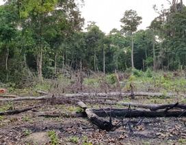 Rừng Phú Quốc cháy: Có dấu hiệu đốt phá rừng, chiếm đất
