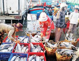 Bị 18 cơ sở thu mua hải sản khiếu nại, Quảng Bình báo cáo Chính phủ