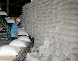 Lượng gạo tồn trong kho doanh nghiệp lại gia tăng