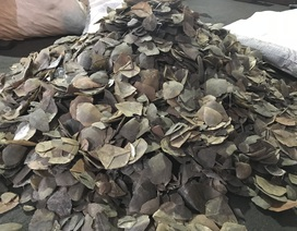 Hàng trăm bao vảy tê tê trị giá hơn 60 tỷ đồng bị bắt giữ ở cảng Cát Lái
