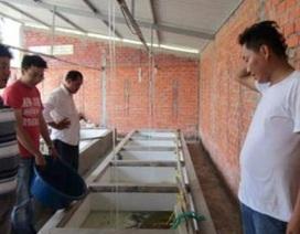 Giám đốc bỏ lương 30 triệu về nuôi lươn, có tiền tỷ