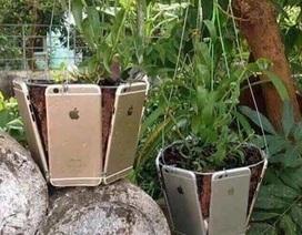 Chứng tỏ độ ăn chơi, con nhà giàu dùng cả tá iPhone làm chậu trồng cây cảnh