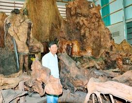 Kỳ lạ thú chơi gốc cây cổ thụ giá bạc tỷ của đại gia Việt