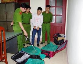 Hai vợ chồng vận chuyển thuê 130kg rắn hổ mang chúa quý hiếm