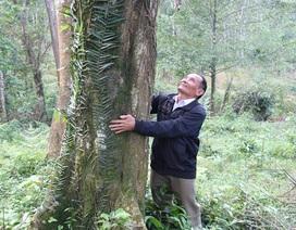 """Người """"canh rừng"""" dưới núi Hoành Sơn"""
