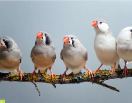 Chim di cư tìm đường về nhà như thế nào?