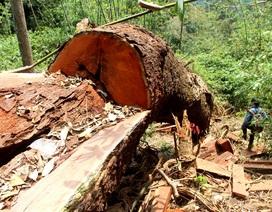 Rừng đặc dụng Sông Thanh đang bị hạ sát?