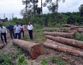 Chuyển công an điều tra vụ lợi dụng tận thu sau bão để phá rừng