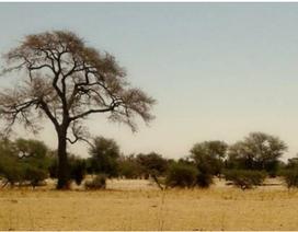 Sa mạc Sahara đã rộng ra thêm 10%