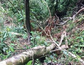 Vụ những cánh rừng bị tàn phá tan hoang: Xử phạt 100 triệu đồng