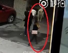 Hy hữu cô gái bất tỉnh vì bị... chó rơi từ trên cao xuống trúng đầu