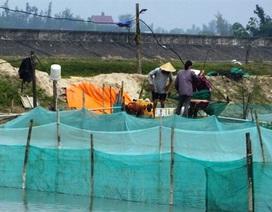 Thăm làng triệu phú ốc hương, doanh thu hơn 18 tỷ đồng/năm