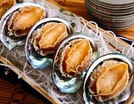 Con bào ngư khô đét giá 15 triệu/kg: Lùng khắp Phú Quốc tìm hàng độc