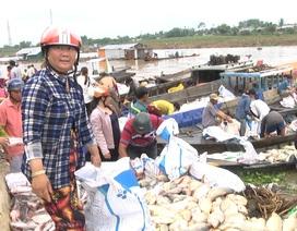 Hàng trăm tấn cá bè bất ngờ chết trên sông