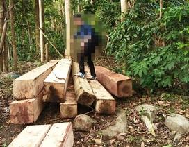 """Khởi tố vụ phá rừng """"khủng"""" tại Gia Lai"""