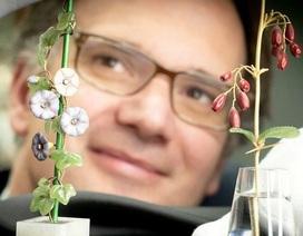 Hai cành hoa quý cất trong hộp giày có giá 15 tỷ đồng