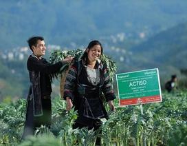 Bảo vệ sức khỏe lá gan từ dược liệu của người H'Mông