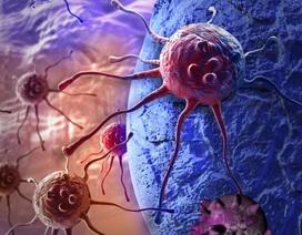 """Đã biết cách tiêu diệt các tế bào ung thư """"bất tử"""""""