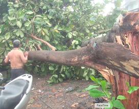 TPHCM: Nhiều nhà dân tốc mái, cây xanh bật gốc sau mưa
