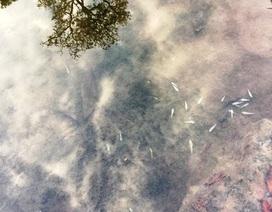 Người dân dùng rễ cây thuốc chết cá ở rừng di sản