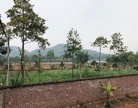"""Hà Nội: Xác minh thông tin một Thứ trưởng """"gom"""" đất nông lâm trường"""