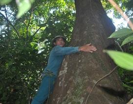 Khám phá rừng lim nghìn tuổi độc nhất xứ Nghệ
