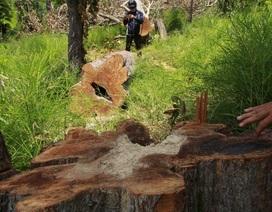 Kỷ luật, kiểm điểm hàng loạt cán bộ để xảy ra phá rừng phòng hộ