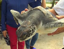 Từ chối bán rùa biển tiền triệu, ngư dân quyết thả về đại dương
