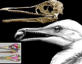 Hóa thạch 3D hiếm có tiết lộ những mỏ chim đầu tiên có răng