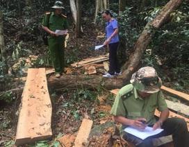 Các vụ phá rừng còn chậm bị phát hiện, có biểu hiện làm ngơ