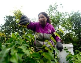 Người phụ nữ mưu sinh trong rừng ở vùng ven Sài Gòn