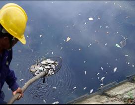 Đà Nẵng: Cá chết nổi đầy sông Phú Lộc do… thiếu oxy