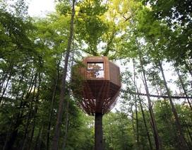 Ngôi nhà trên cây mô phỏng tổ chim tuyệt đẹp tại Pháp